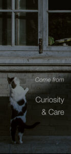 Photo of a curious cat with overlaid text that reads Come from Curiosity & Care
