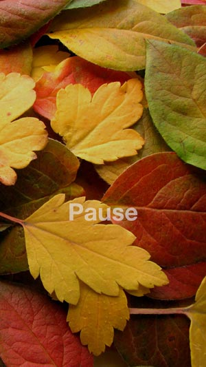 """Photo of leaves with the word """"Pause"""""""